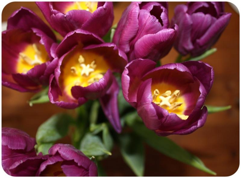Purple tulips | Ship-Shape and Bristol Fashion