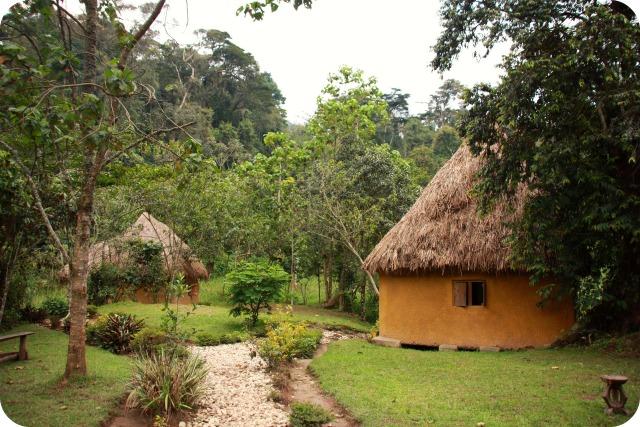Bandas at Nshongi Gorilla Camp