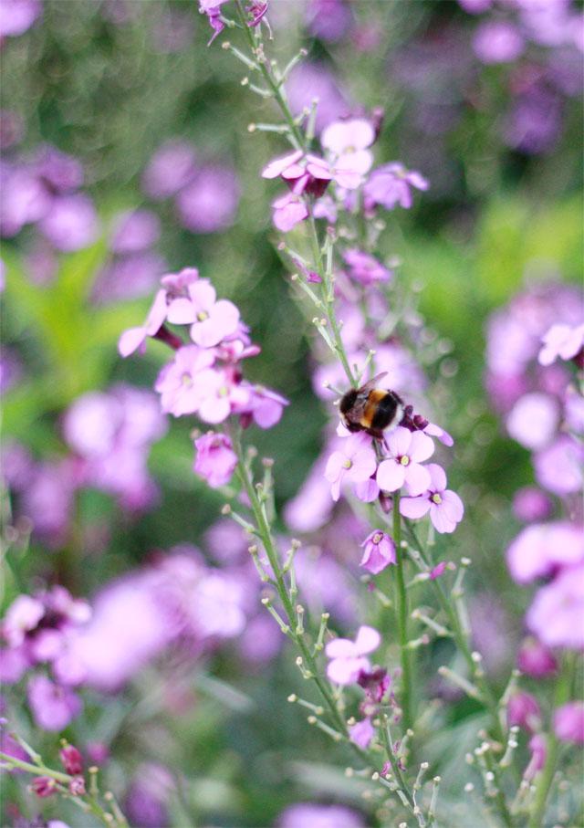 Bumble bee having a taste