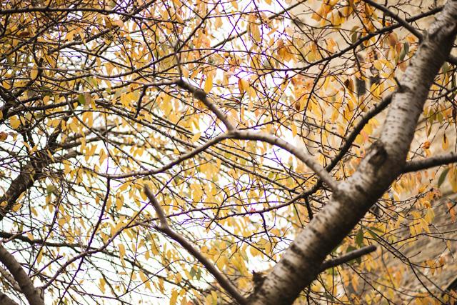 Autumn in Castle Park