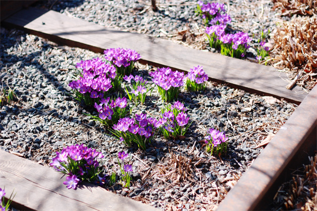 Flowers grow in old railroad