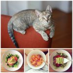 The Little Things #15 – Kittens and Whole30 Escapades