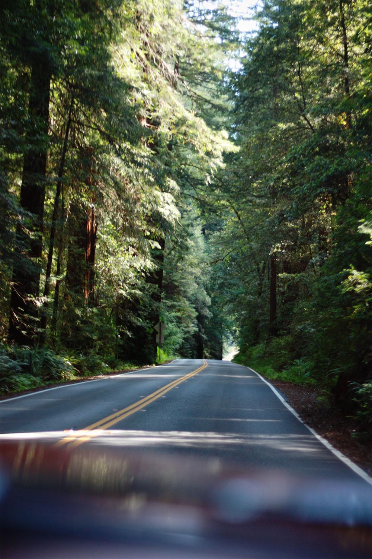 Redwoods Highway Northern California