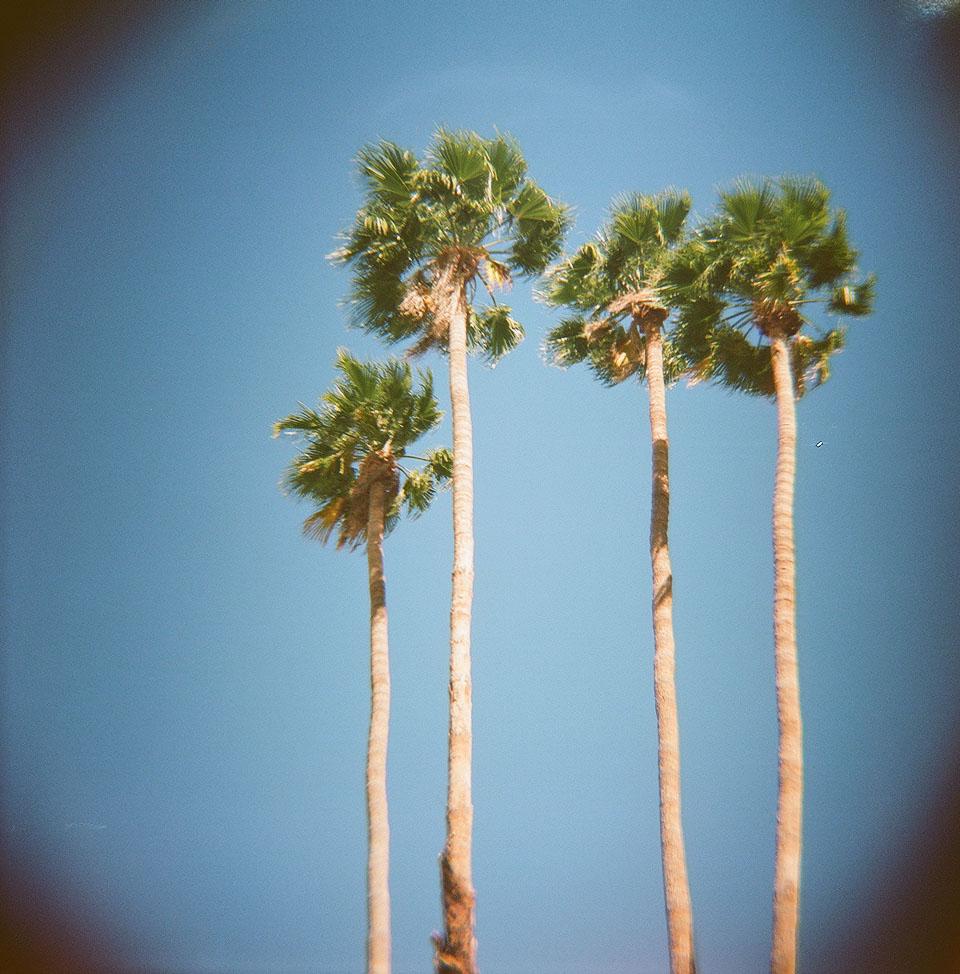 Palm trees lomography